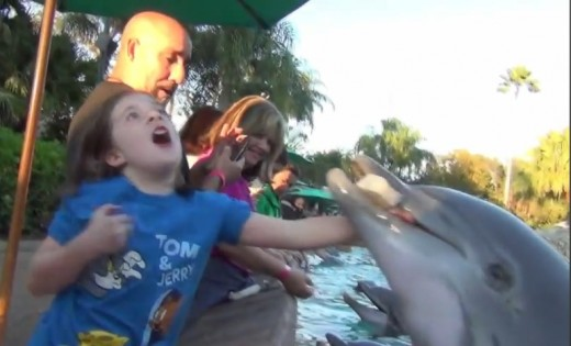 Dolphin Bites young girl at SeaWorld Orlando